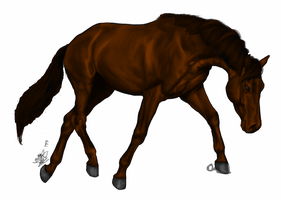 Warmblood- WIP by ilove-horses