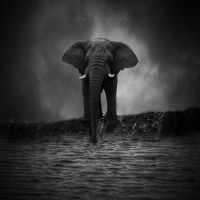 The Elephant by IlaydaPortakaloglu