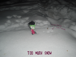 Zim found snow by ZimPLUSDib