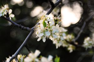 Spring 5 by paintedfingers