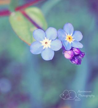 Forget Me Not by MouseMakesMess