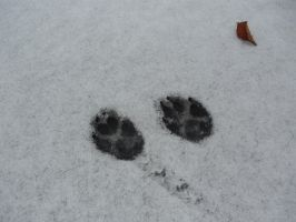 Large Paw Prints In The Snow by KeswickPinhead