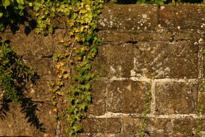 Ivy Wall by FoxStox