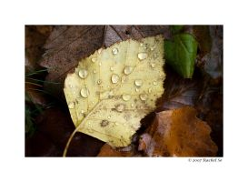 October Rains by butterfly36rs