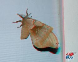 Anaglyphic Polyphemus Moth by redtailhawker