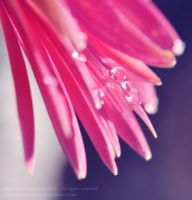 Drops on pink by BeautifulDisasterIam
