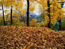 Leaf Pile 10381448 by StockProject1