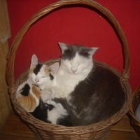 CAT BASKET by bluesse