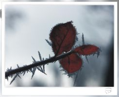 Ice crystals on red leaves by inkoginko