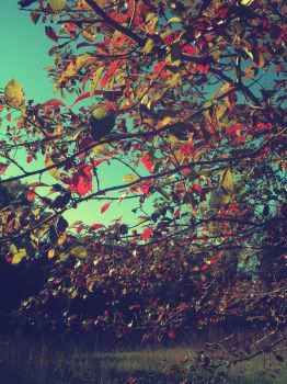 Vintage Fall by christinavk