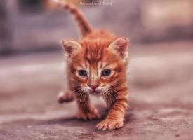 Mom,Where are you ?! by M4fotos