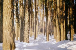 Sunny Forest 2 by rmalo5aapi