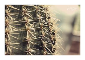 Cactus Close Up by hell0z0mbie