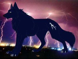 Storm Wolf by Whispered-Time