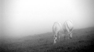 'From the morning fog' by Suensyan