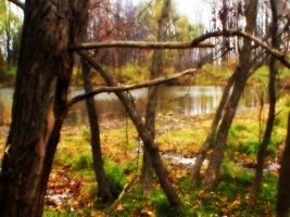 The Hidden Pond 2 by FT69