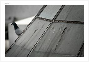 + Pigeon II by brainlessinc