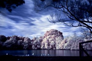 Infrared by AlexCarata
