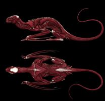 Dragon Muscle structure by deviantetienne