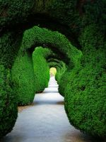 Green Tunnel by Mgsblade