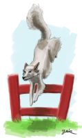 Jumping Dog by YairMor