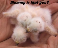 Mommy is That You? by kkrex