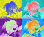 Finn - Andy Warhol Style by xNZx