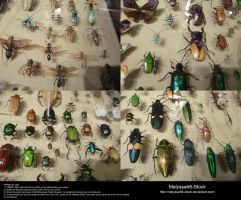 Assorted Insects Stock 7 by Melyssah6-Stock