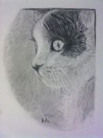 Kitty by StaNitYyY