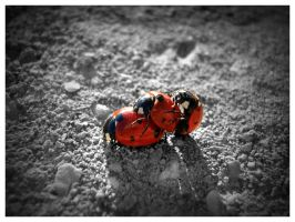 Menage a trois Ladybug Version by InfiniteCreations