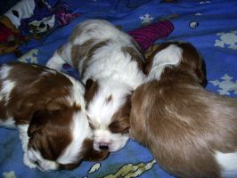 Puppies - 2.5 Weeks old by sephiroth1204