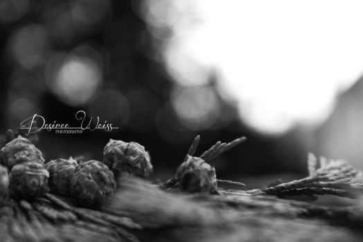 Baby Pinecones by DYWPhotography