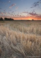 Sunset over cut wheat by austinboothphoto