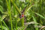 Ladybug in the green field by Budeltier
