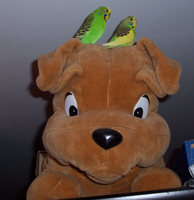 2 Budgies and a plush dog :3 by LadyEarthDragoness