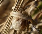 Wasp Spider Nest by TheFunnySpider