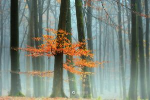 Last Leaves II by *LarsVanDeGoor