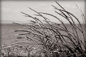 By the Sea by PascalsPhotography