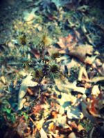 Bristle Flowers by LiveInAMoment