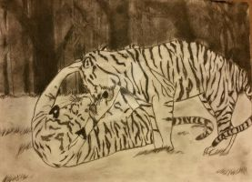 Charcoal of playing tigers by Paige-Gale9507
