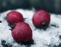 Apples... by Arina1