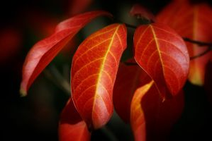 Holding On To Fall by Vividlight