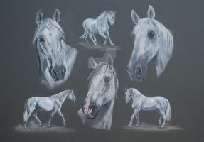 The Spanish Greys by Stephanie-Greaves