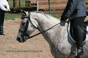 Quarter Horse Stock 99 by tragedyseen