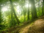 Hazy forest light STOCK by needanewname