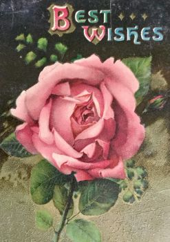 Clipped Pink Rose by Yesterdays-Paper