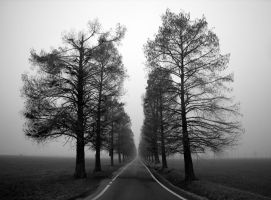 Forever gray by fabioricci