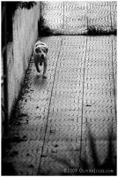 it s a dog's life by OliverJules