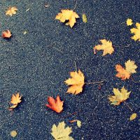 Traces of Autumn by LeaHenning
