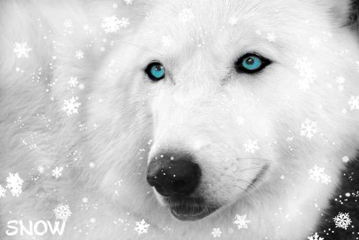 Gift of Snow by Toboe